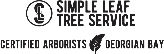 Simple Leaf Service w Certified Arborists